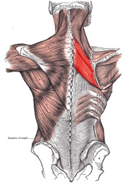 Rhomboids from CrossFit Invictus Blog