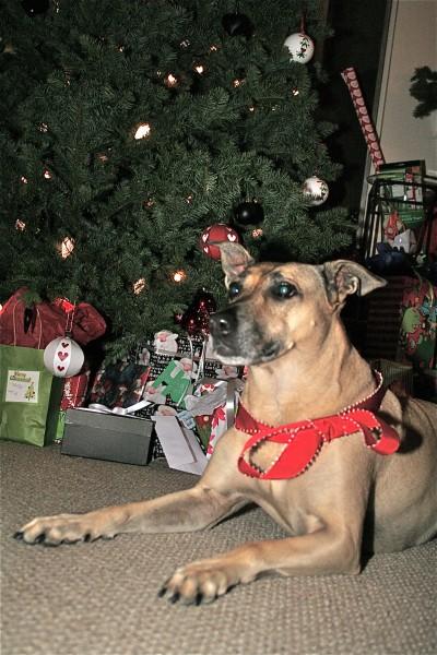 The Christmas Dingo of CrossFit Invictus