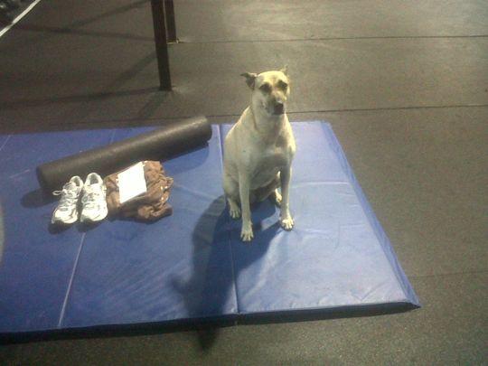 The Dingo of Invictus Fitness San Diego