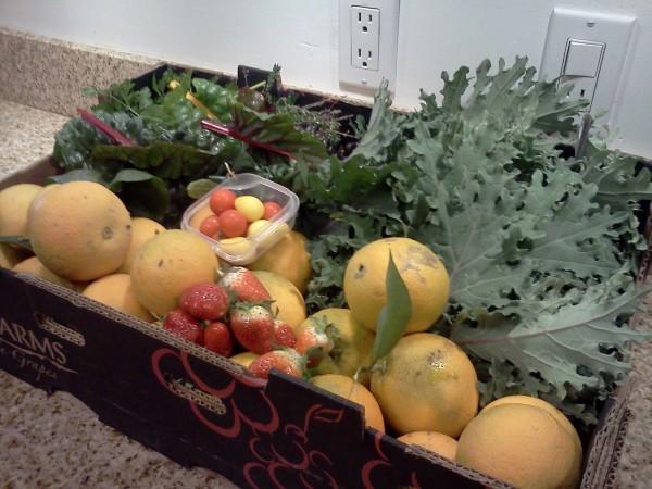 Winter Harvest Veggies by Invictus Fitness