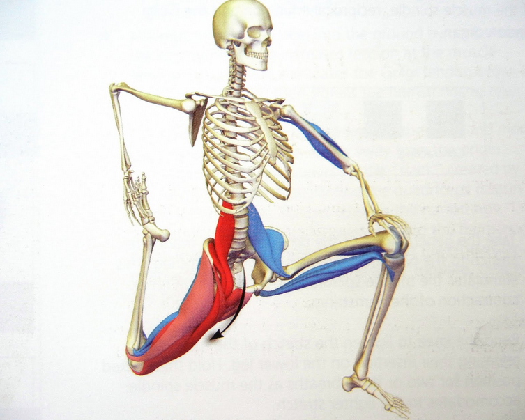 activating your psoas invictus fitness