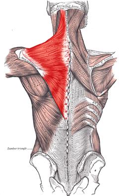 Nerve trapezius pinched Trapezius/pinched nerve?