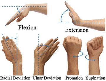 wrist flexion extension